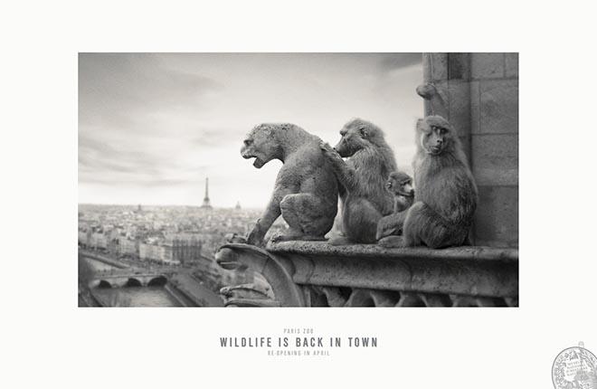 paris-zoo